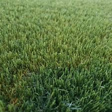 Smartgrass Esmeralda